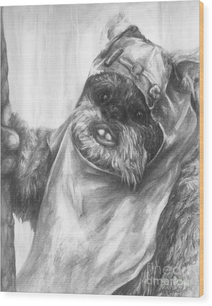 Curious Wicket Wood Print
