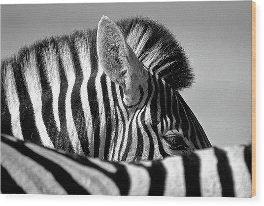 Curious Zebra Wood Print by Marc Pelissier