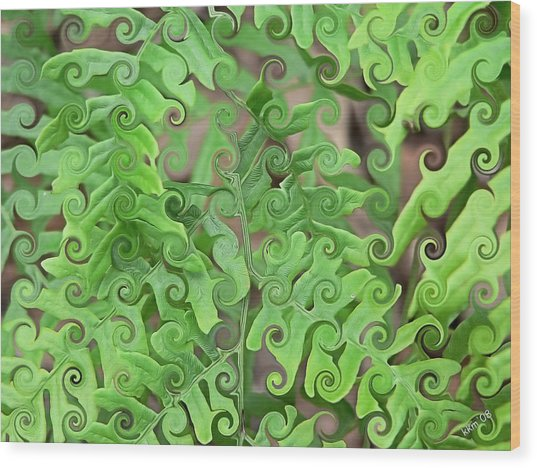 Curly Fronds Wood Print