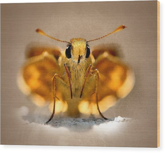 Cute And Curious Brown Butterfly Wood Print