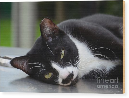 Cute Black And White Tuxedo Cat With Nipped Ear Rests  Wood Print