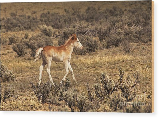 Cute Colt Wild Horse On Navajo Indian Reservation  Wood Print