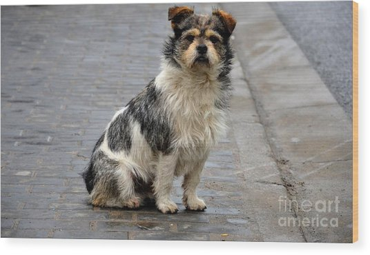 Cute Dog Sits On Pavement And Stares At Camera Wood Print