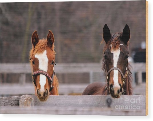 Cute Yearlings Wood Print