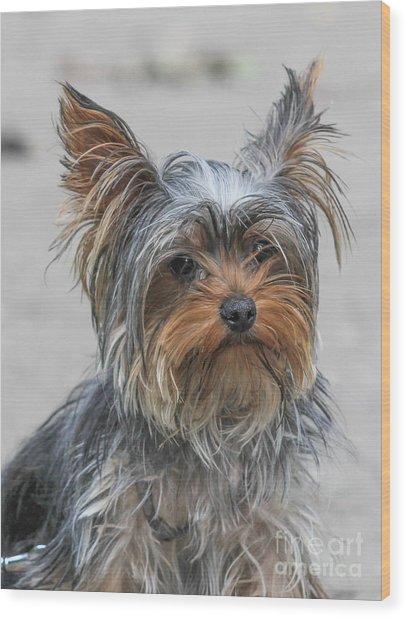 Cute Yorky Portrait Wood Print