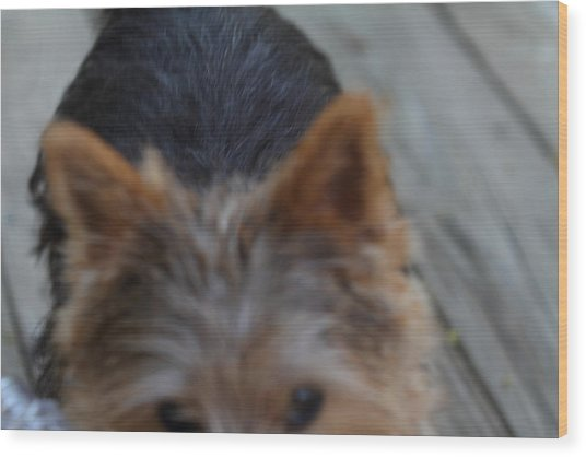 Cutest Dog Ever - Animal - 01133 Wood Print by DC Photographer