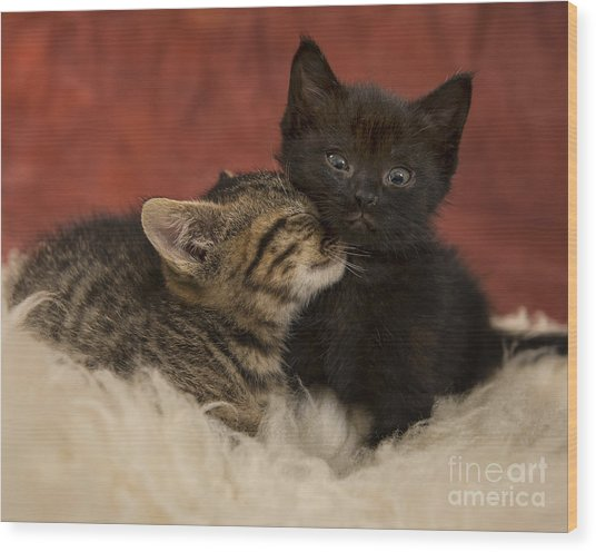 Cuties Wood Print