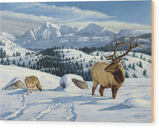Cutoff Mountain -  Elk And Coyote   Wood Print