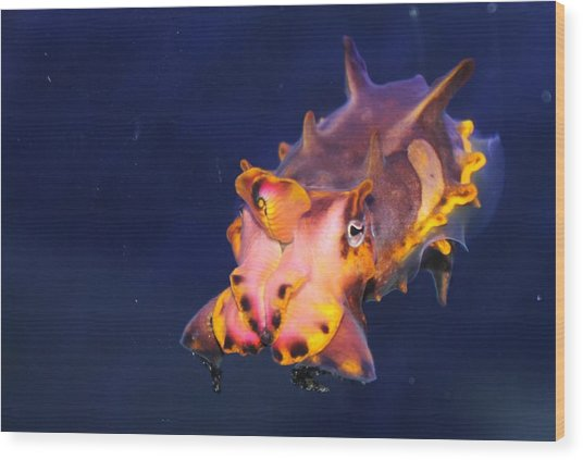 Cuttlefish Wood Print by Kristi Schmit