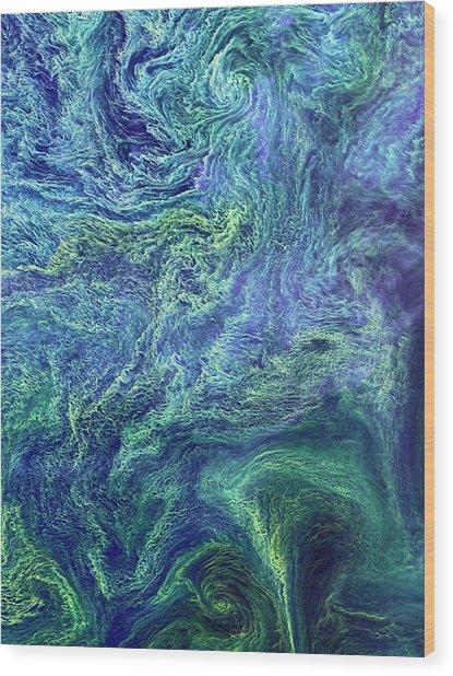 Cyanobacteria Bloom Wood Print by Nasa