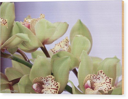 Cymbidium Orchids  Wood Print