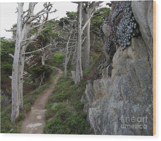 Cypress Grove Trail Wood Print