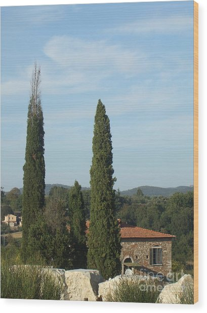 Cypress In Rapolano Wood Print