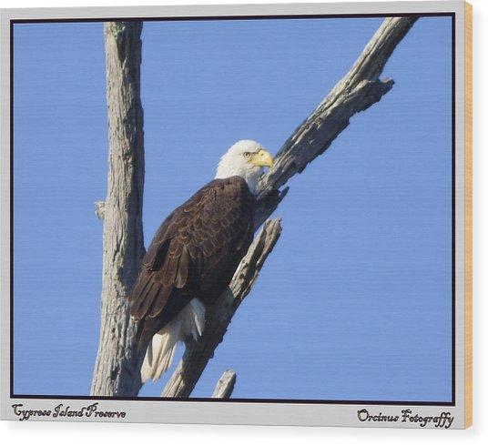 Cypress Island Eagle Wood Print