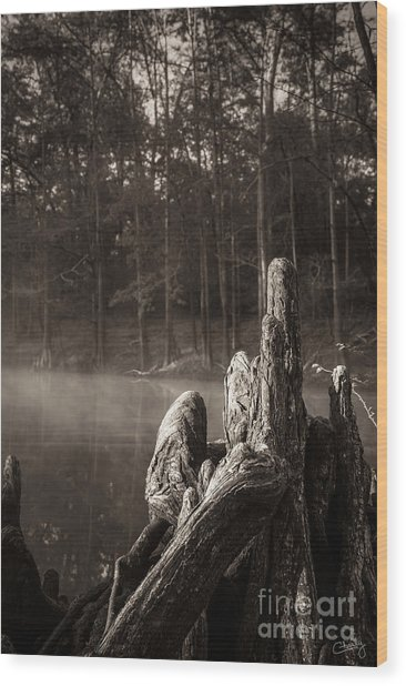 Cypress Knees In Sepia Wood Print