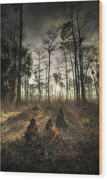Cypress Stumps And Sunset Fire Wood Print