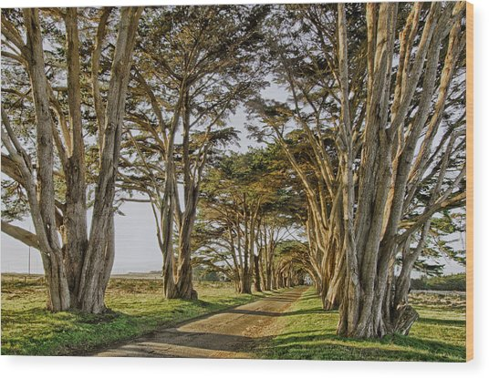 Cypress Tunnel Wood Print by Robert Rus