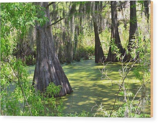 Cyprus Trees Wood Print