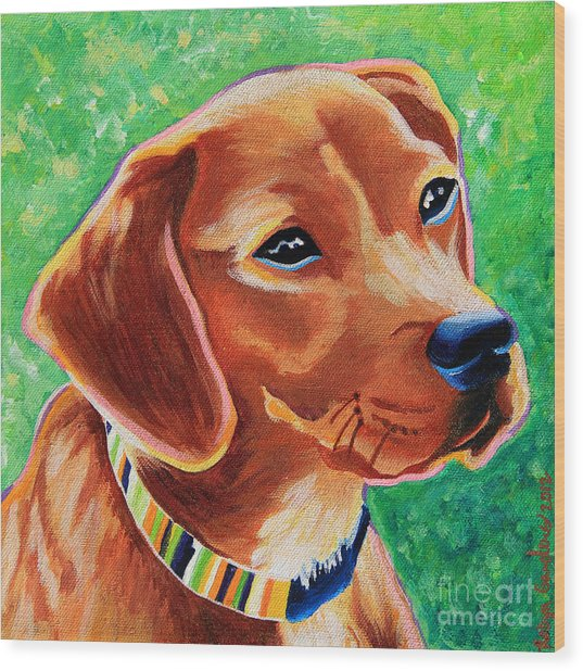 Dachshund Beagle Mixed Breed Dog Portrait Wood Print