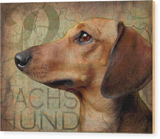 Dachshund Wood Print by Wendy Presseisen