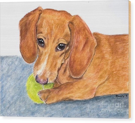 Dachshund With Tennis Ball Wood Print
