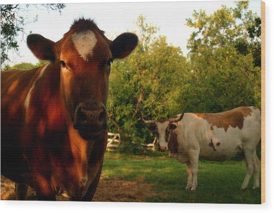 Dads Cows Wood Print