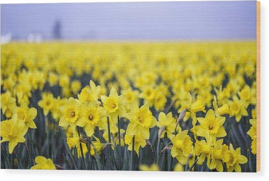 Daffodil Blur Wood Print