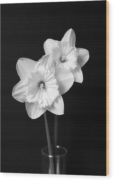 Daffodil Flowers Black And White Wood Print