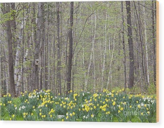Daffodil Woods Wood Print