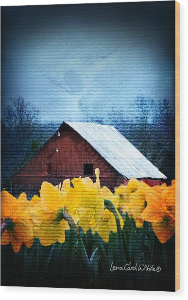 Daffodils And A Red Barn Wood Print