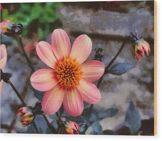 Wood Print featuring the digital art Dahlia First Love by Paul Gulliver