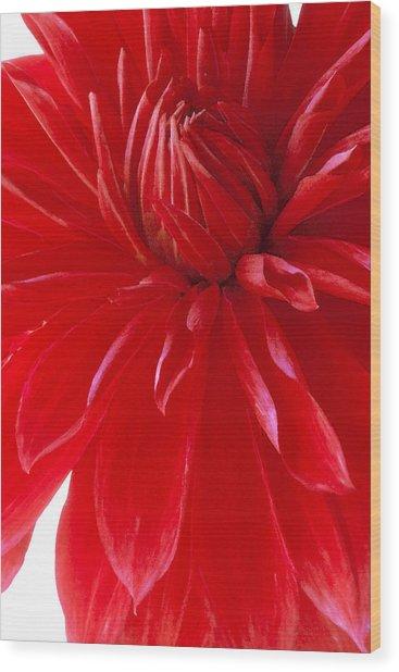 Dahlia I Wood Print
