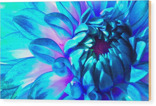Dahlia In Pastel Wood Print by James Hammen