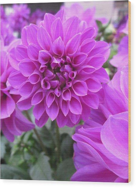 Dahlia In Pink Wood Print