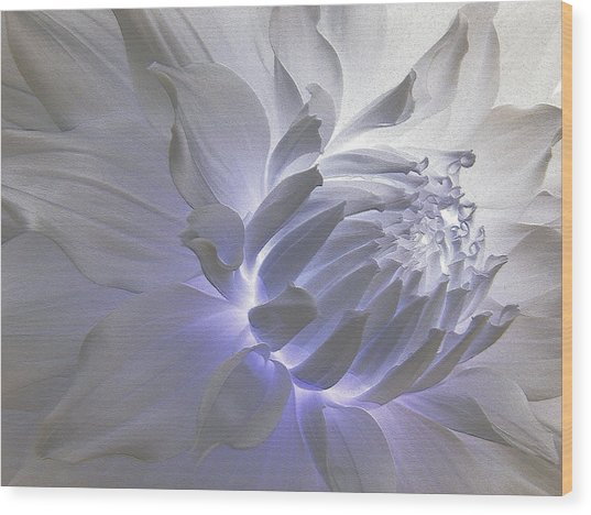 Dahlia Inner Beauty Wood Print