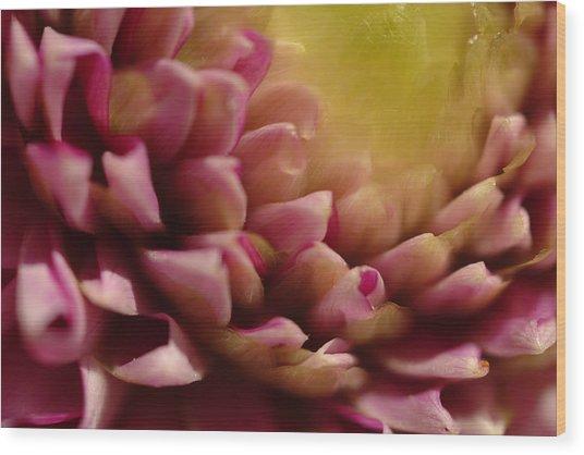 Dahlia Up Close Wood Print
