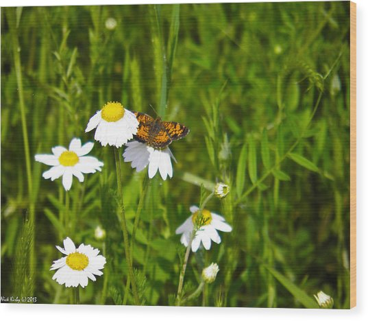 Daisey And Butterfly Wood Print