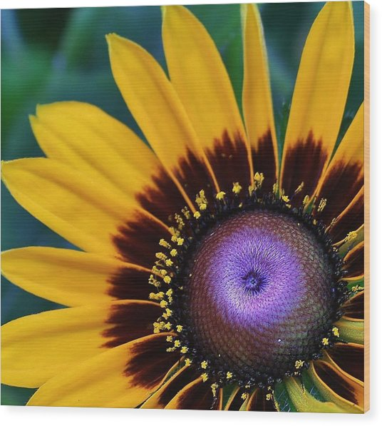Daisey Of A Different Color Wood Print by Bruce Bley