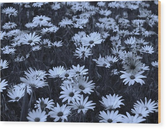 Daisies - Colorized Wood Print