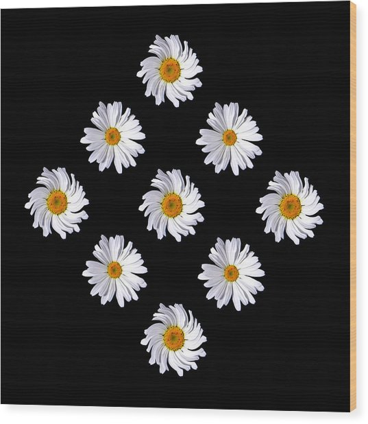 Daisy Diamond Wood Print by James Hammen