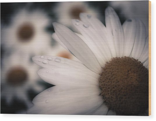 Daisy Don't Doubt Does He Love Me Does He Love Me Not Wood Print
