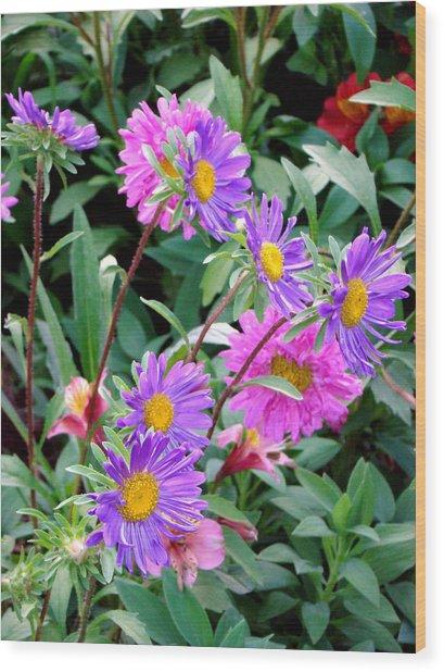 Daisy Flowers  Wood Print by Sanjeewa Marasinghe