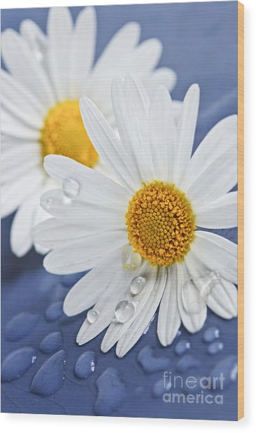 Daisy Flowers With Water Drops Wood Print