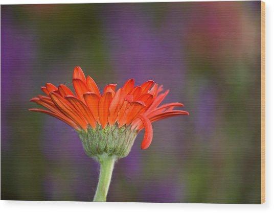 Daisy For Monet Wood Print