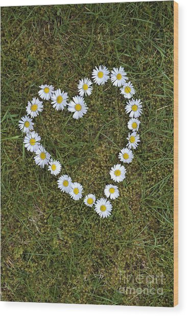 Daisy Heart Wood Print by Tim Gainey