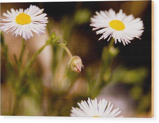 Daisy In A Field Wood Print