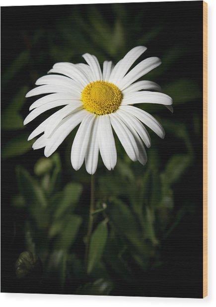 Daisy In The Garden Wood Print