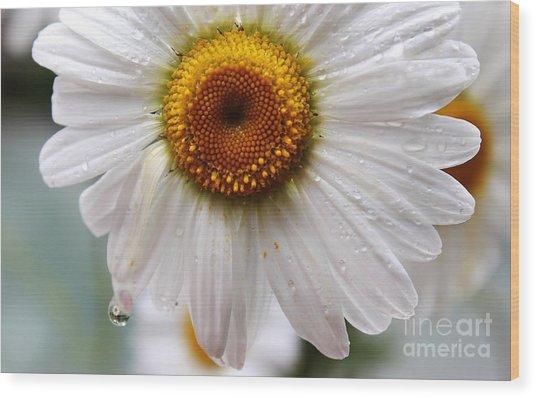Daisy Reflect Wood Print