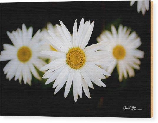 Daisy Trio Wood Print