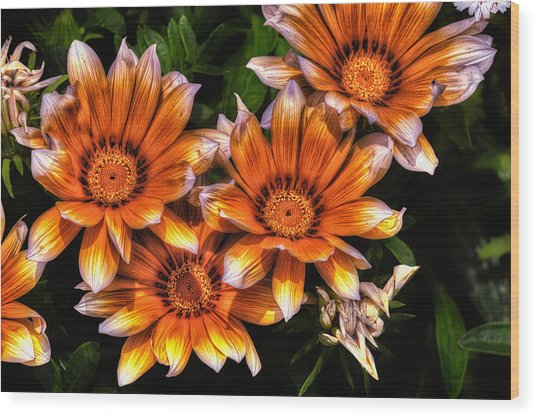 Daisy Wonder Wood Print